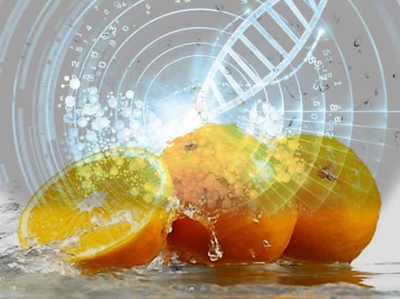 Il-Massone-e-gli-OGM